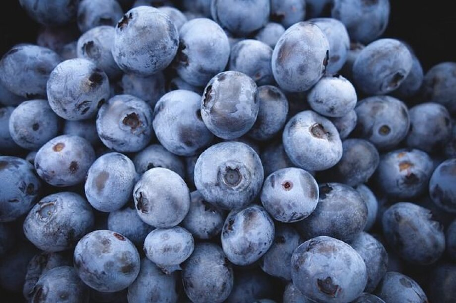 Poland becoming blueberry power